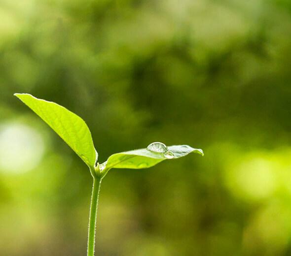 Green Initiatives Sunny Earth